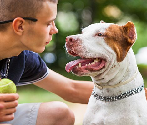 handsome-guy-playing-with-dog-outdoors-7V8NKPZ-1.jpg